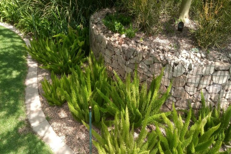 A gabion planter is a great way to add dimension into your garden